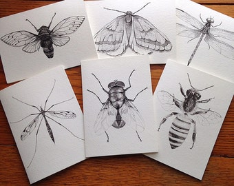 Insect Art Blank Cards, Entomology Art, Cicada Art Card, Thank You Cards, Dragonfly Art Cards, Gallery Wall Decor, Bee card, Greeting Cards