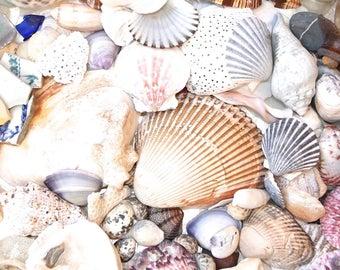 MASSIVE Beach Treasures Instant Collection - Sea shells, Seashell, Sea Glass, Pottery - Ocean Curiosities Supply  -  Nautical Coastal Decor