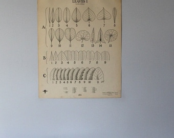 Vintage Leaves I classroom chart from Turtox