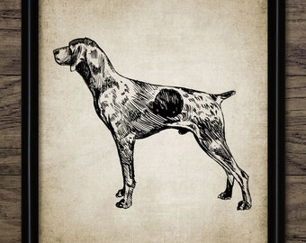 Vintage German Short-Haired Pointer Dog Print - Pointer Dog Illustration - Dog Art - Printable Art - Single Print #556 - INSTANT DOWNLOAD