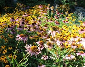 Wild Flower- Photograph