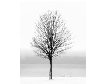 Winter Tree: 8x10 black & white nature photographic print. Also comes in more sizes as a canvas, pearl or metallic print.