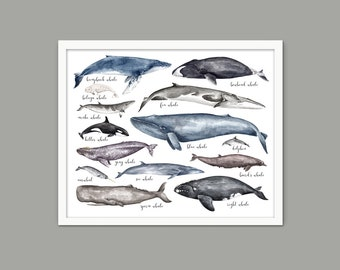 Whales Of The World Art Print, Watercolor Whale Painting, Educational Whale Comparison Chart, Whale Bathroom Decor, Bathroom Whales Art #899