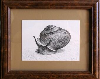 """Pen & Ink Snail Drawing, """"Snail Poe"""""""
