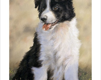 Border Collie Puppy Dog Portrait by award winning artist JOHN SILVER. Personally signed A4 or A3 size Print. BC005SP
