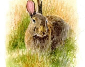Rabbit Print, Rabbit Art, Hare Art, Bunny Art, Woodland Animal Art, Nursery Woodland Art, Childrens Wall Art, Rabbit Watercolor by P. Tarlow