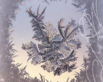 Fleurs de Givre #3 - 8x10 ( 20 x 27 cm) Fine Art Photograph