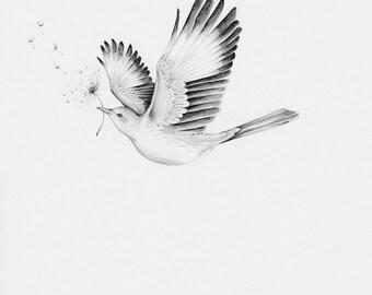 Bird Drawing Giclee Fine Art Bird Print Modern Minimalist Wall Art Black and White Bird Print Bird Wall Art Flying Bird Dove Monochromatic