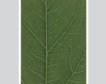 look real close HIBISCUS - green Artprint A3 / A1 / 50x70 Poster