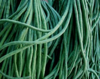 Asparagus Beans Yard Long Heirloom Seeds Rare Grown To Organic Standards