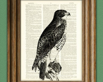 RED TAILED HAWK beautifully upcycled vintage dictionary page book art print