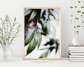 Dreamy Leaf 1, Fine Art Cannabis Photography Print, Instant Digital Download, Beautiful Cannabis Photography Art Print, Printable Canna Art