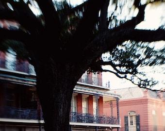 new orleans art french quarter photography architecture decor red decor landscape art NOLA Tree