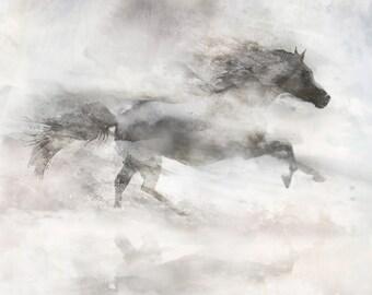 White Horse Run 03: Giclee Fine Art Print 13X19