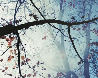 Mystical Woods Photograph light blue tree branches smoke in the air foggy woodland forest 8x10 campfire