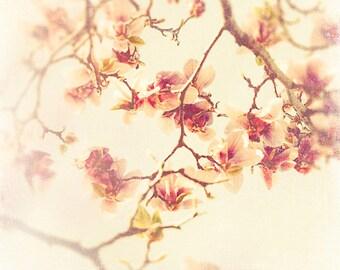 Magnolia Print, Flower Photography, Nature Art Prints, Spring Art, pastel, floral art, blush pink, magnolia flower, fine art photograph,