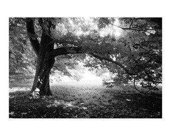 Woodland, Anglesey Abbey, Cambridge, Signed Art Print / Black and White Tree Photography / Woodland Photo