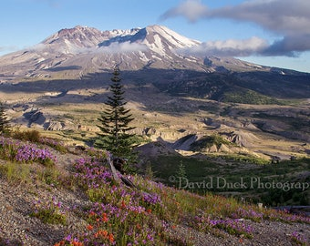 Mt. St. Helens Wildflowers, Pacific Northwest, Cascade Mountains, Volcano, Mt. St Helens, wall art, home decor.