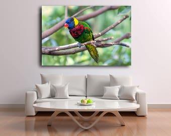 Digital Download Nature Photography Bird Print Animal Photography Parrot Wildlife Fine Art Instant Download Print Canvas Wall Art Print