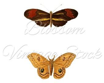 Vintage Butterflies Print, Wall Decor Butterflies, Printable, Clipart, INSTANT DOWNLOAD Digital Illustration for Print, Artwork - 1419