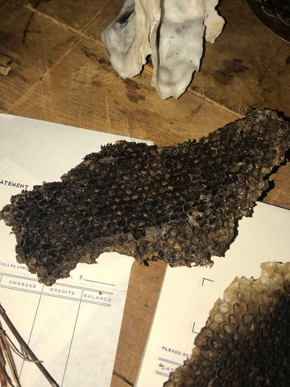 Natural Honey Comb Bee Hive Wax Art Supply Wild Bees Harvested From DuneEmpress On Etsy Studio