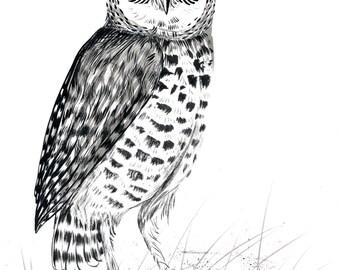 """Burrowing Owl - 9 x 12"""" Original Painting, Waterproof Ink on Watercolor Paper."""