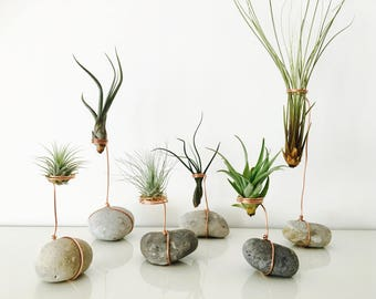 Air plant, tillandsia, tillandsia air plant holder stand, Pebble, terrarium