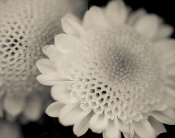 Black and White Photography, Nature Wall Art, Fine Art Print, Botanical Print, Large Wall Art, Flower Photo, Nature photography, Woman Gift
