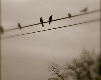 Bird Photography, Black Bird, Austin, Texas, Black and White, Grey, Dreamy, Surreal, fPOE, Dream Bird Pair