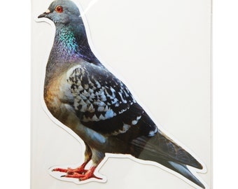 Large Pigeon Facing Left Photo Magnet