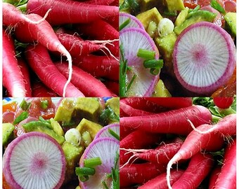 CHINA ROSE Radish seeds - Perfect as Sprouts Crisp and firm to taste ~ Mild - High In Vitamin C - 50 - 55 Days