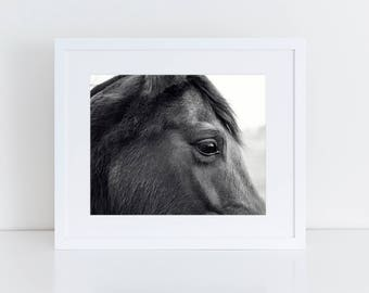 Horse Eye Picture | Close Up Horse Photograph in Black and White | PHYSICAL PRINT