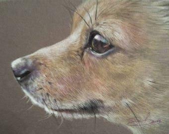Pet Portrait. Colored pencil on toned paper. 5 x 7 inches.
