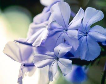 Macro Photography Purple Flower Print