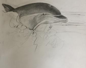 Dolphin pencil sketch