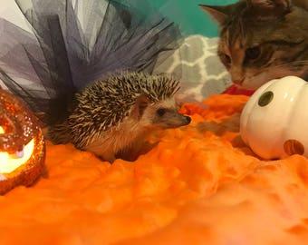Witchy Hedgehog Costume Tutu