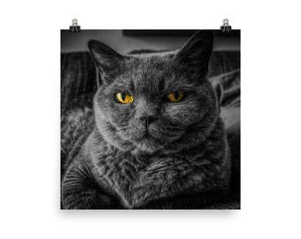 Black/Gray Cat With Yellow Eyes Image Digital Download
