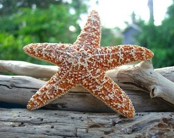 Mermaid Starfish Hair Clip, Beach Hair Clip, Starfish Bridal Hair Clip, Mermaid Costume, Mermaid Birthday Party, Beach Family Photo