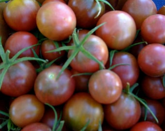 Black Cherry Heirloom Tomato Seeds Grown to Organic Standards Sweetest Variety Hugely Prolific BEST Seller Rare Seeds