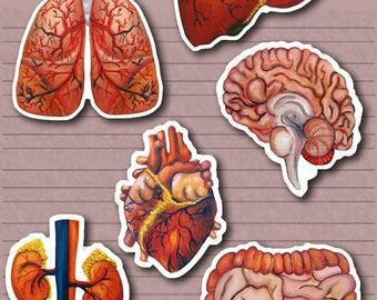 Organ Stickers