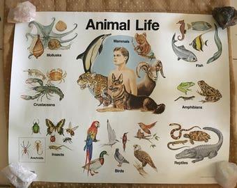 Awesome Vintage 1980's Animal Life Farm Life Teaching Aid Posters