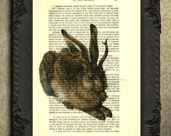 jackalope art print on antique book page, jackalope print, rabbit with antlers poster