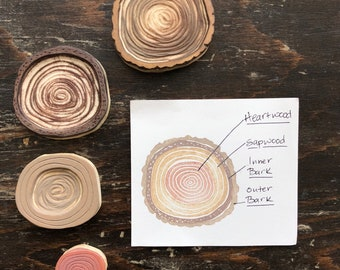 Tree Rings Rubber Stamp Set Hand Carved Montessori Materials Educational Art
