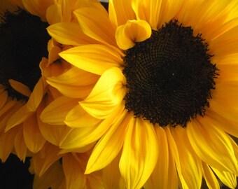 Sunflower photo, yellow flower photo, summer flower decor, colorful flower art, botanical print, nature flower art, sunflower decor | Face