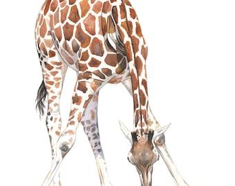 Giraffe Painting - 2014  giraffe watercolor painting - print of watercolor painting A4 size medium print- G2014