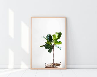 Potted Plant   Wall Art    Home Decor   Poster   Framed Print   Canvas Print