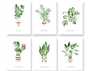 """Jeu de 6 cartes plantes d'intérieur - Cartes illustrées - Cartes botaniques - Cartes postales - Assortiment de cartes """"House Plants"""" - Vert"""