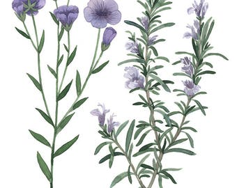 ORIGINAL Rosemary And Flax water-colour painting
