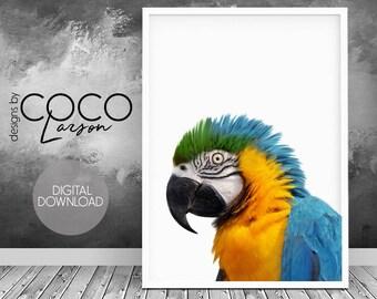 Parrot african bird print nursery art parrot wall art parrot printable tropical bird art blue yellow birds tropical bird photo parrot art