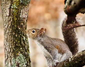 Squirrel - Photography Print